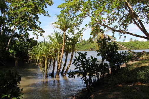 Backwaters at one of the Islands
