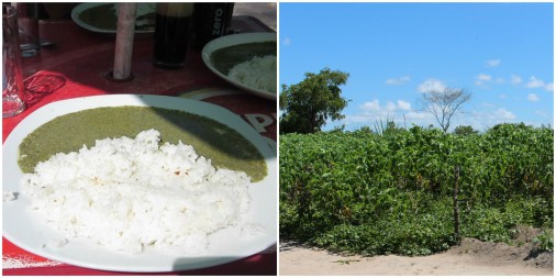 Matapa on left and Cassava plant on right